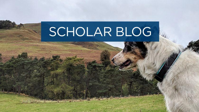 Scholar blog - animals that stole my heart