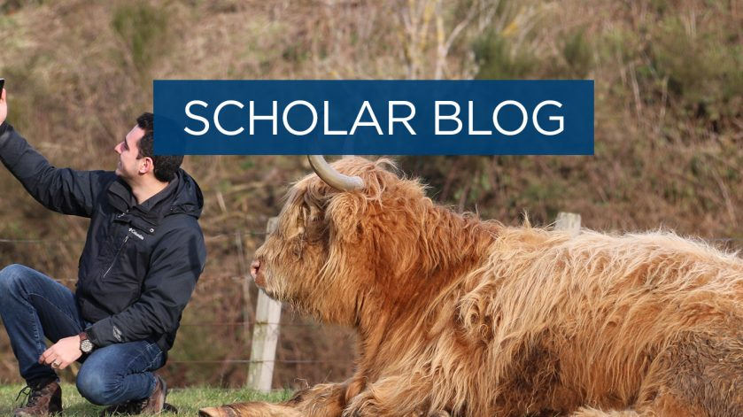 Scholar blog: Animals that stole my heart - Highlands Cow edition