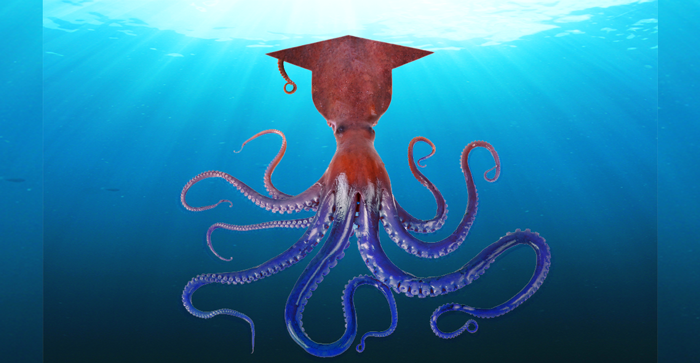 New octopus species named after Chevening