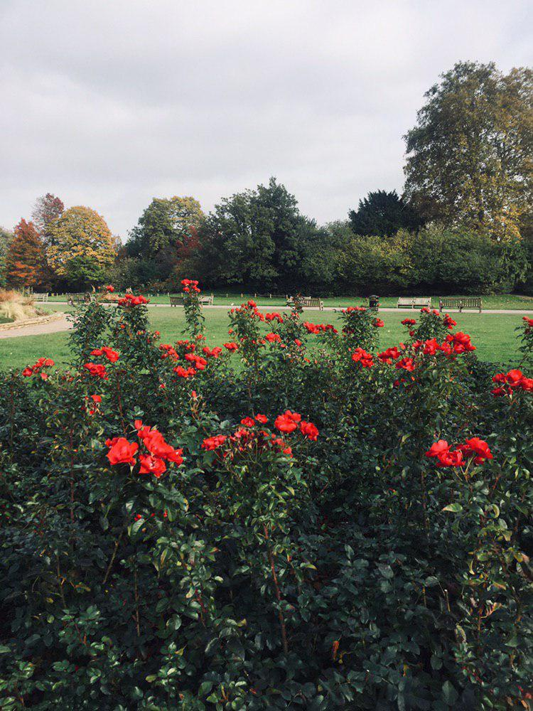 The most amazing lunch breaks at the rose garden in Regent's park, just 7 min away from the BBC headquarters